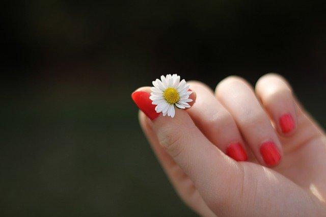 Ruce držící květinu